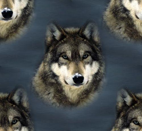 Grey Wolf Background Seamless