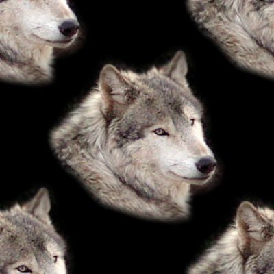 Wolf on black background Seamless Repeating Tile