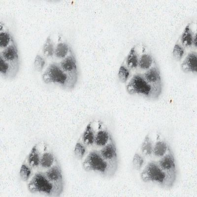 wolf-tracks-snow-background